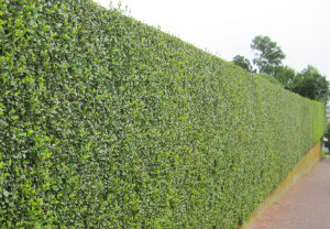 Hedge Cutting N5
